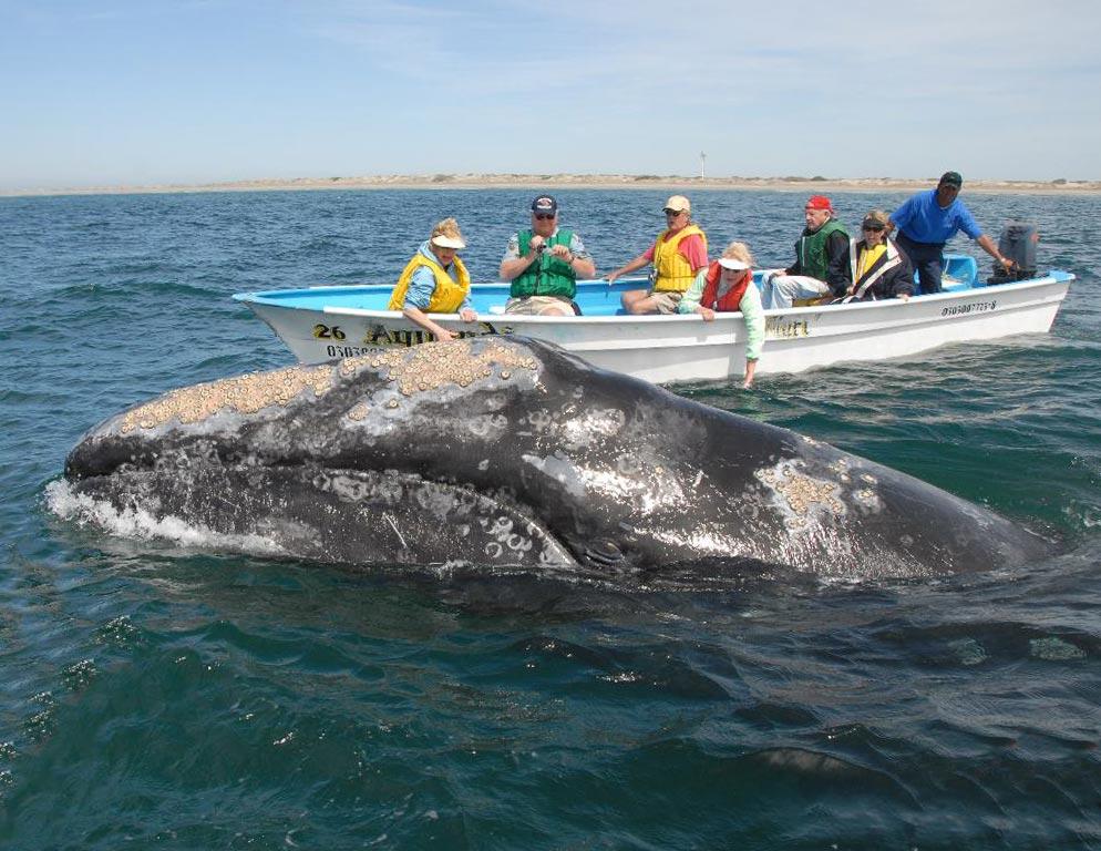 Ensenada Whale Sighseeing